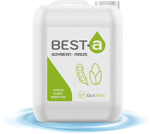 best a rond gb 530x468px