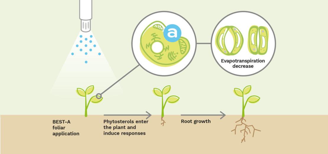 elicitplant besta reponsesmethaboliques evapotranspiration racin