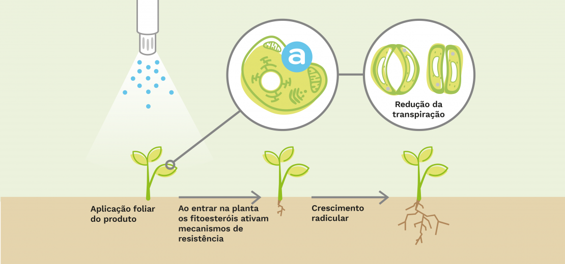 elicitplant besta reponsesmethaboliques evapotranspiration racines