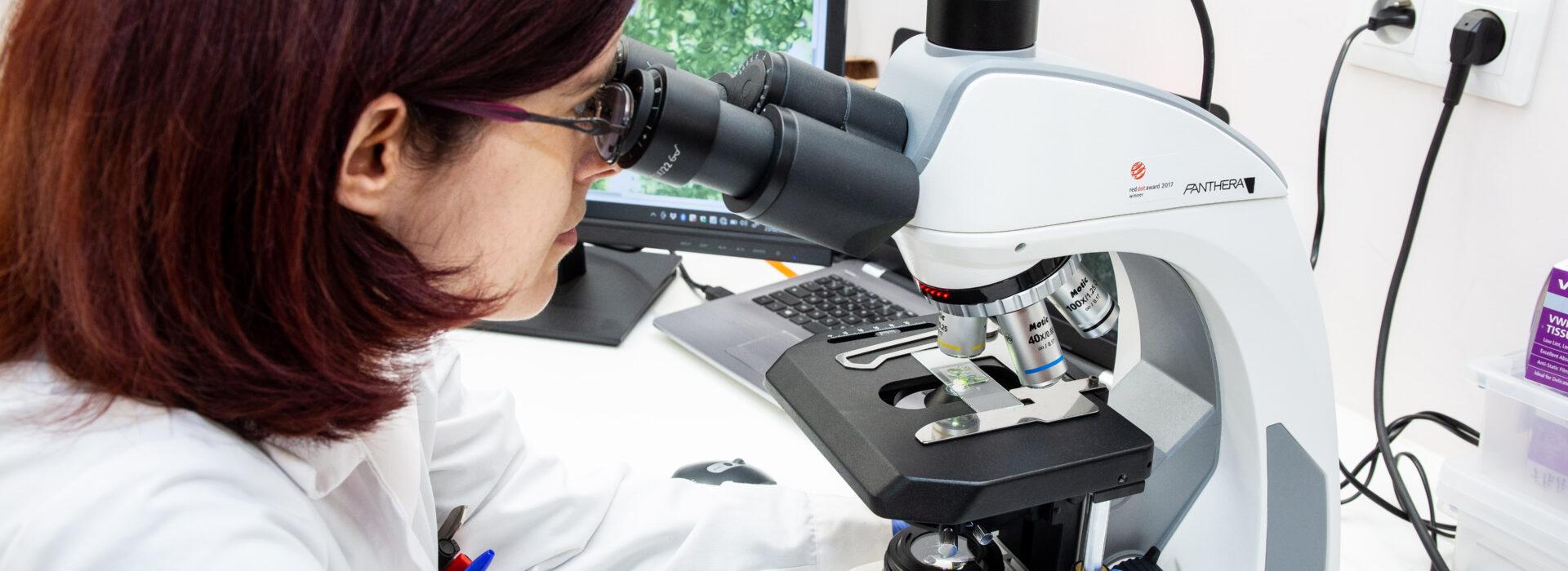 elicitplant science technologie metabolismeplante phytosterols