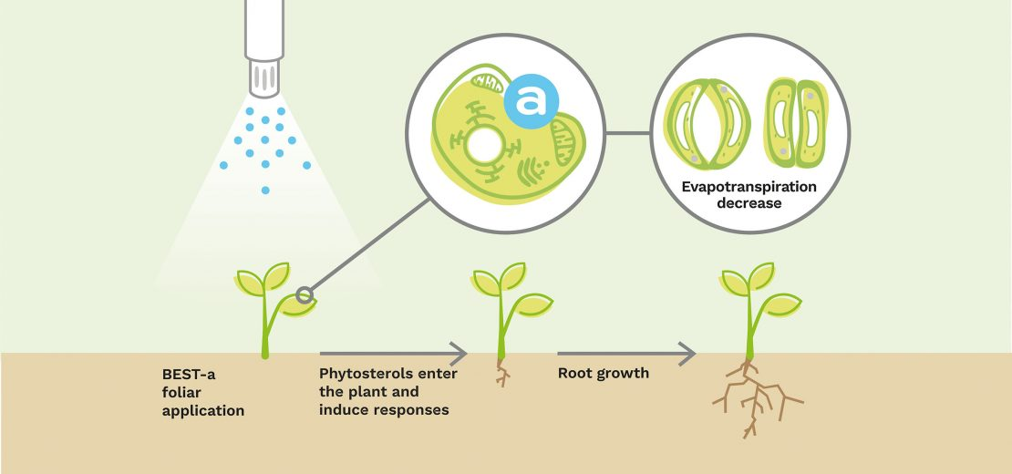 elicitplant-besta-reponsesmethaboliques-evapotranspiration-racines